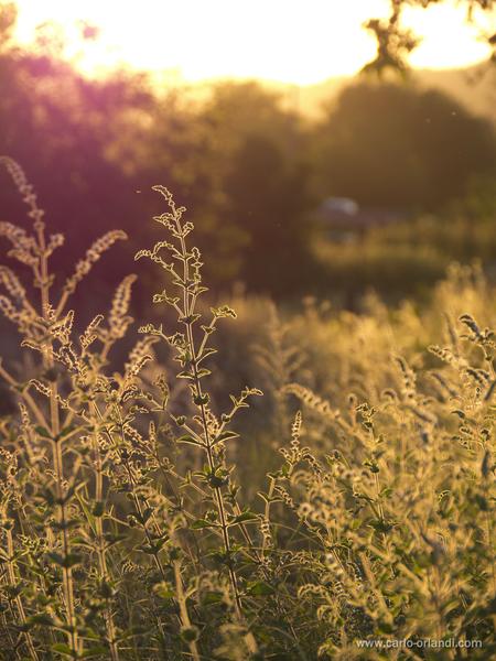 """Natura al tramonto - """"Luce del Tramonto"""""""